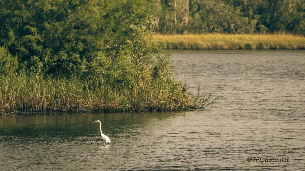Great Egret Landscape - Click To Enlarge