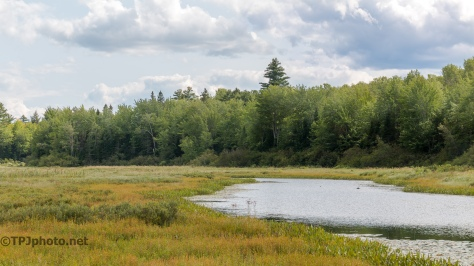 Maine Bog -Click To Enlarge