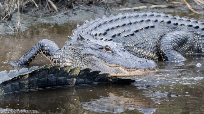 Crawl Right Over His Buddy For A Closer Look - click to enlarge