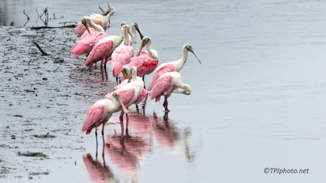 Bowl Of Spoonbills - click to enlarge