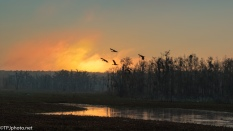 Marsh Waking Up - click to enlarge