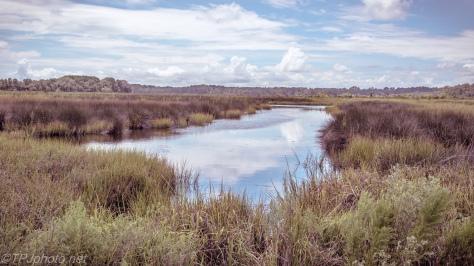 South Carolina Marsh Landscape - click to enlarge