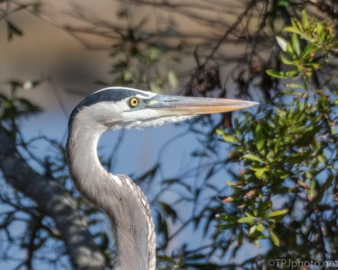 Right Behind Me The Whole Time, Heron - click to enlarge
