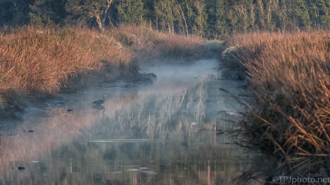 Marsh Fog And A Heron - click to enlarge