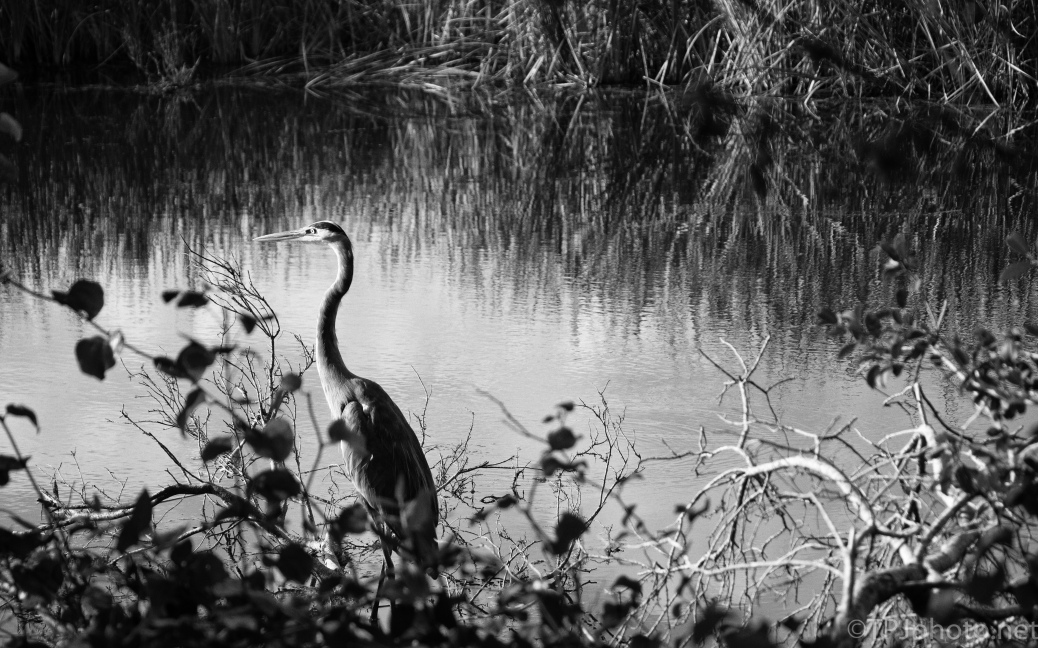 Heron, Agfa APX 400 Film Filter - click to enlarge