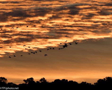 Fiery Ibis At Dawn - click to enlarge