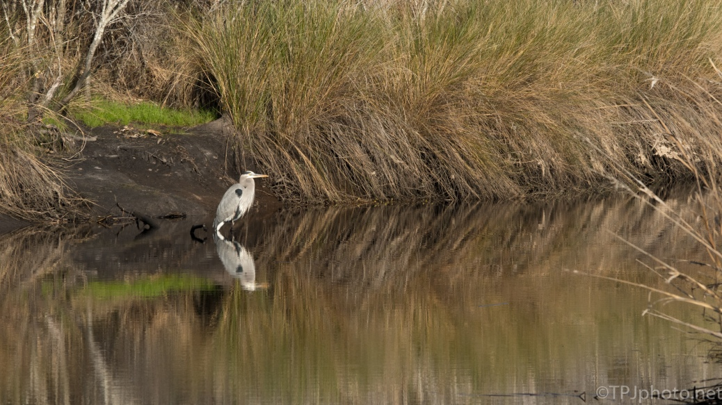 Sitting Pretty, Heron - click to enlarge