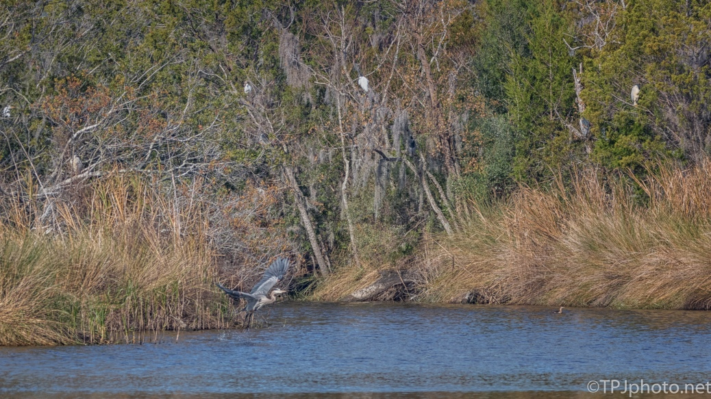 A Marsh Scene - click to enlarge
