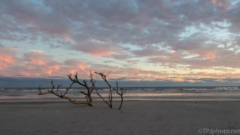 Soft Sunset, Charleston - click to enlarge