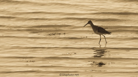 Dealing With Glare, Yellow Legs - click to enlarge