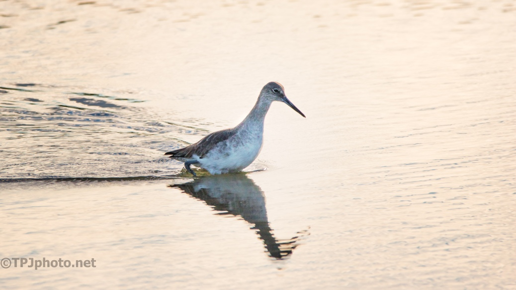 Willet Tidal Pools - click to enlarge