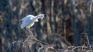 Dancing The Twist, Heron - click to enlarge