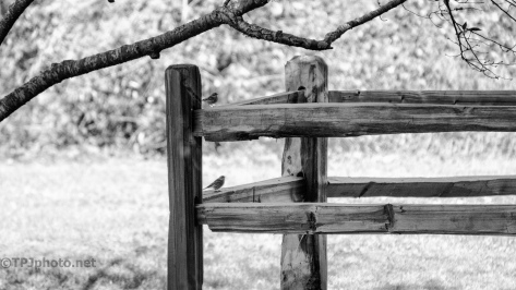 Fence Posts, Sparrows - click to enlarge