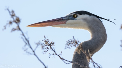 Looking Between The Branches, Heron - click to enlarge