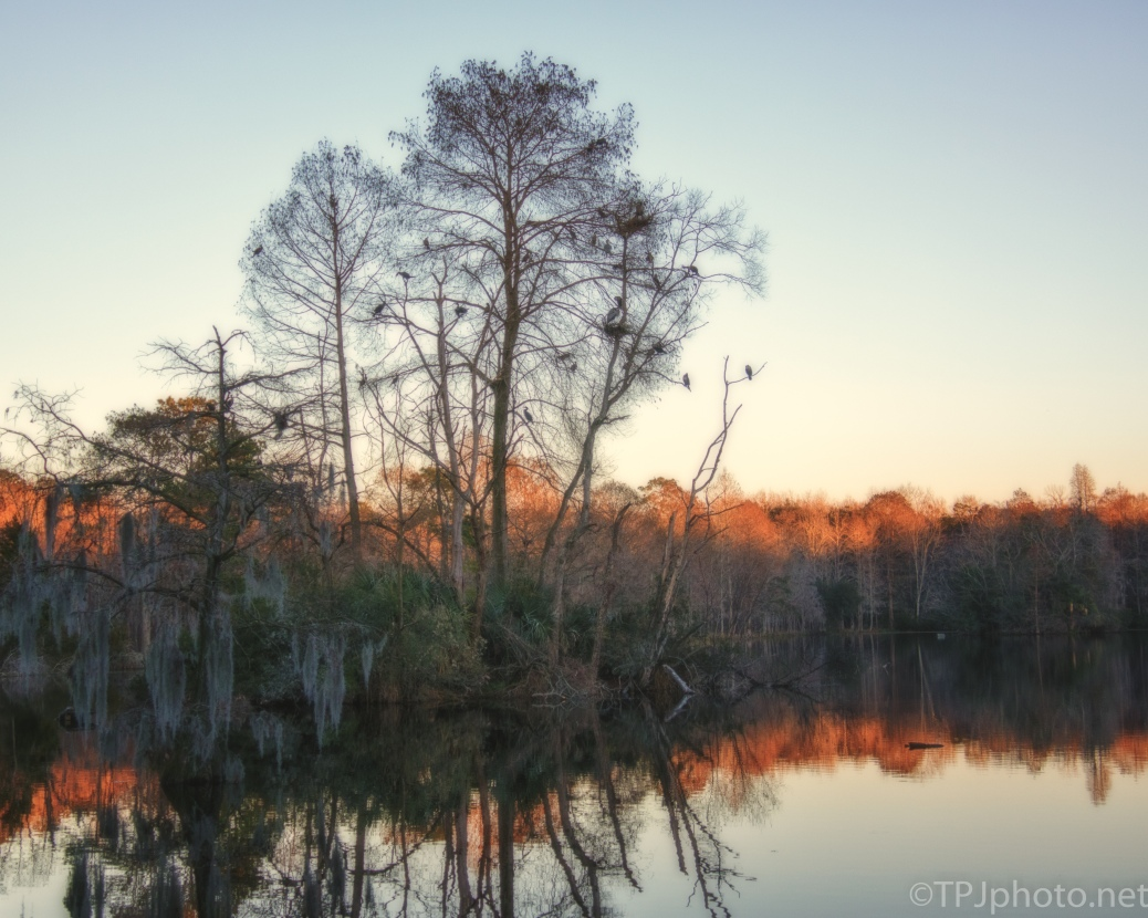 Fading Light, Swamp Rookery - click to enlarge