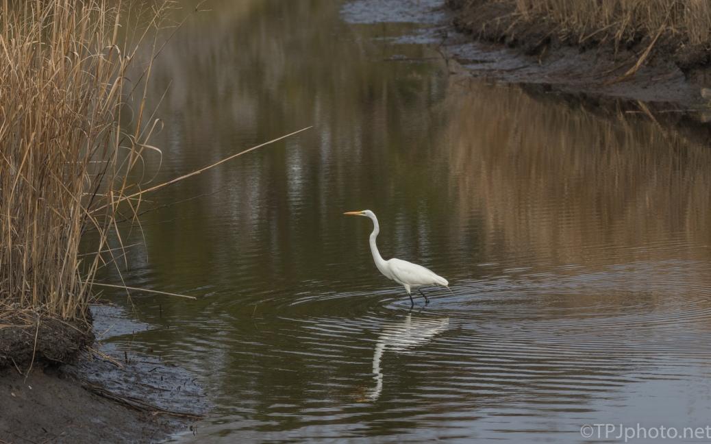 Donnelly Egret - click to enlarge