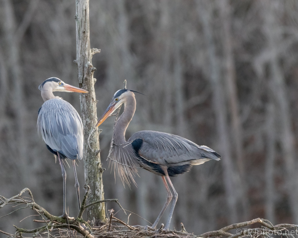 Building Together, Heron - click to enlarge