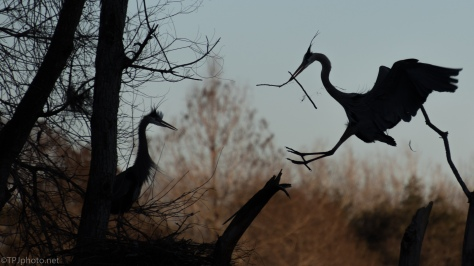 Silhouettes, Dragons With Sticks - click to enlarge