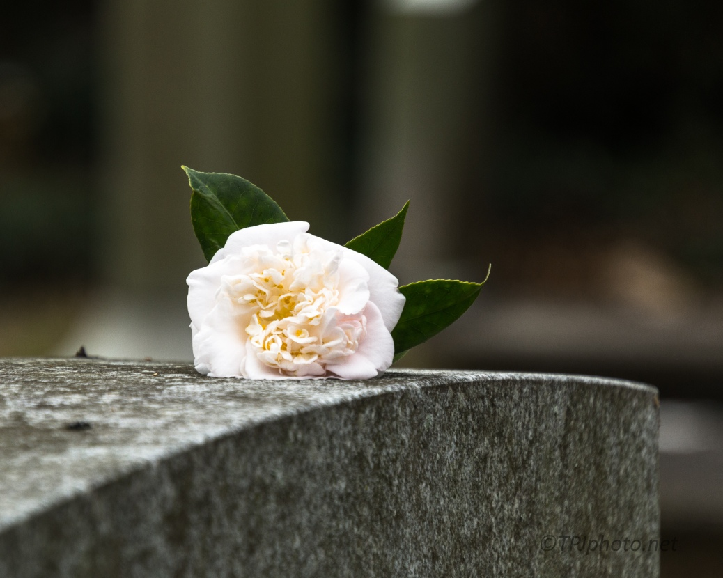 Flower, Headstone - click to enlarge