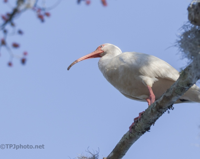 Ibis Overhead - click to enlarge