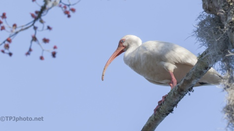 Ibis Overhead - click to enlarge