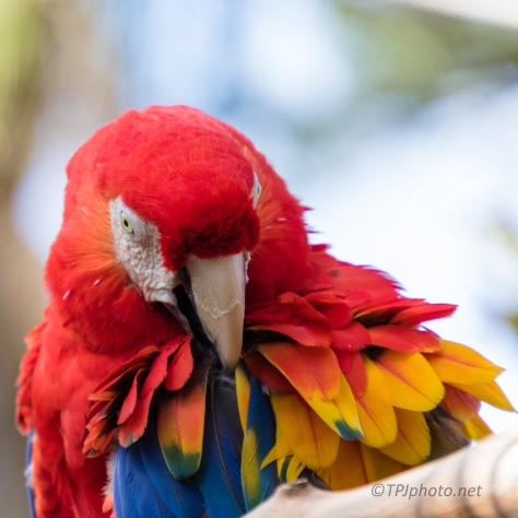 Portrait Session Scarlet Macaw - click to enlarge
