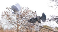 That's Mine, Egret And Heron - click to enlarge