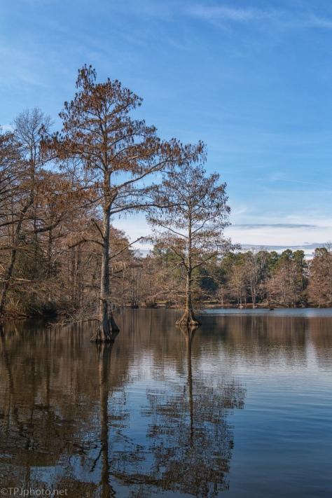 Pond Landscape - click to enlarge