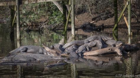 A Shaky, Creaky Bridge Nightmare, Alligator - click to enlarge