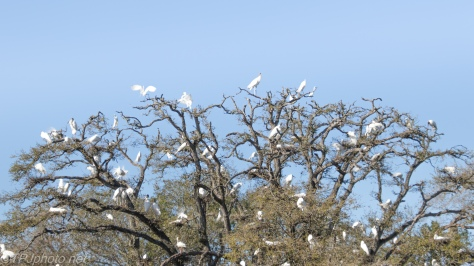 A Chaotic Rookery - click to enlarge