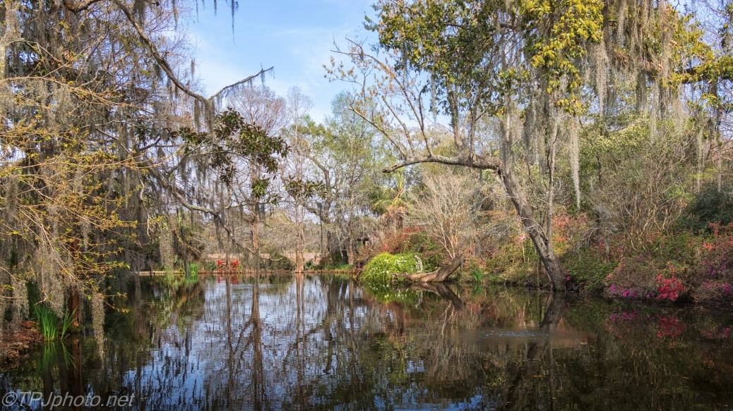 Old Plantation Pond - click to enlarge