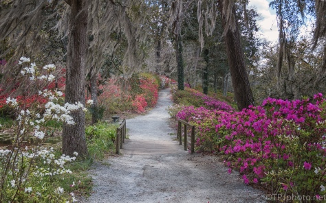 A Walk In The Flowers - click to enlarge