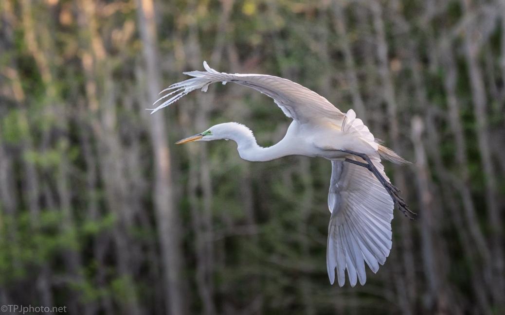 Acrobatics With No Effort, Egret - click to enlarge