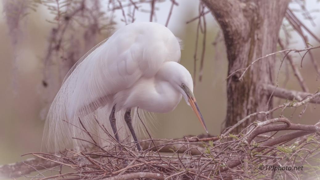 Egret - click to enlarge