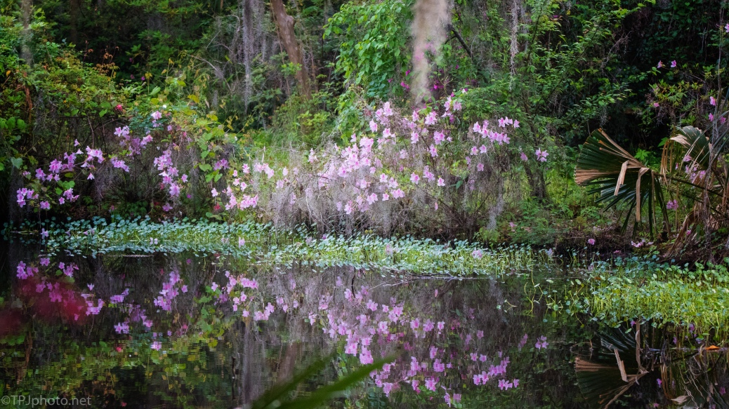 Floral Reflections - click to enlarge
