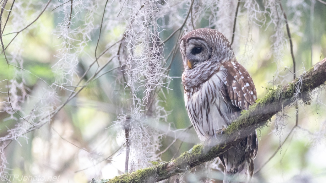 Owl Above A Swamp - click to enlarge