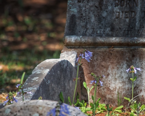A Little Blue Among The Stones - click to enlarge