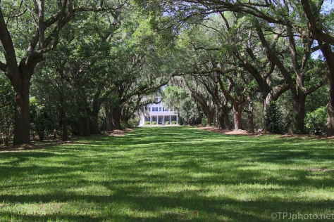 Avenue Of Oaks To The Grand House - click to enlarge