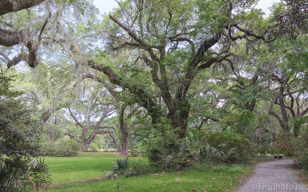 Path Through Magnolia Plantation - click to enlarge
