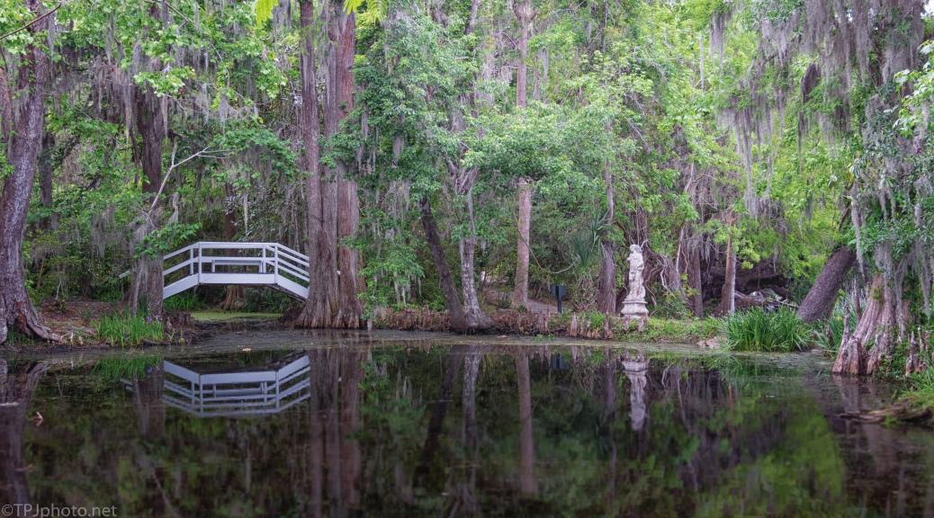 Back Garden Pond, Magnolia Plantation - click to enlarge