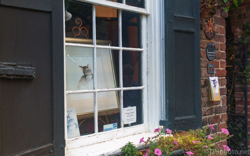 The Gallery Cat - click to enlarge