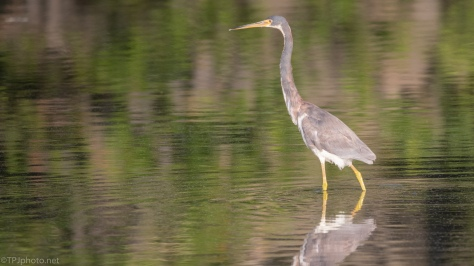 Glare And Reflections, Heron - click to enlarge