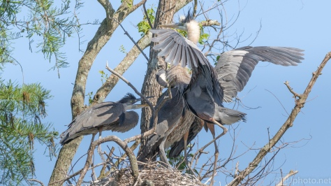 Back At The Nest - click to enlarge