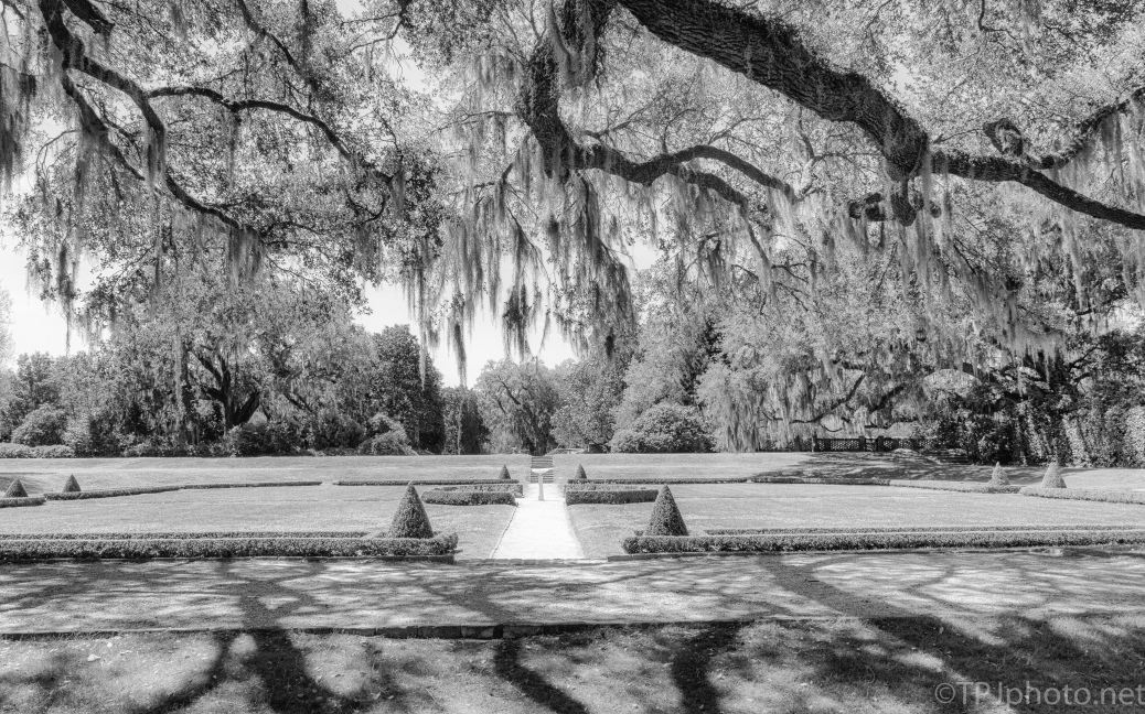 Formal Garden, Black And White - click to enlarge