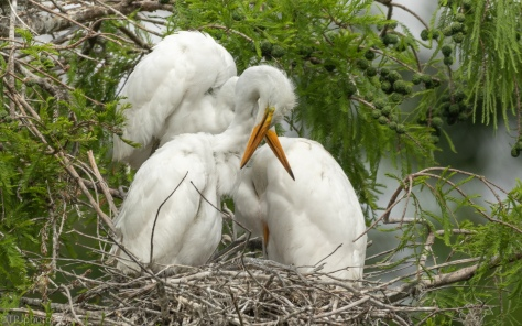 Egret Bundle - click to enlarge