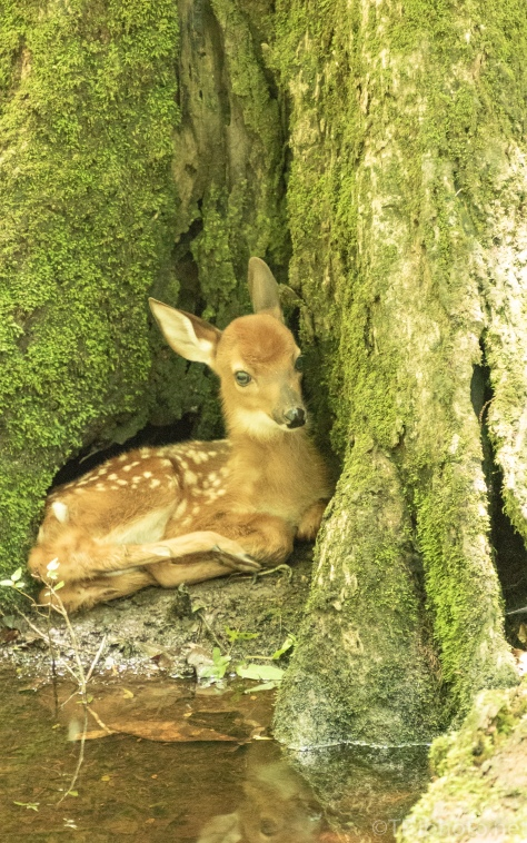 Hidden In A Cypress Tree - click to enlarge