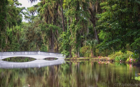 Magnolia Plantation Garden Bridge - click to enlarge