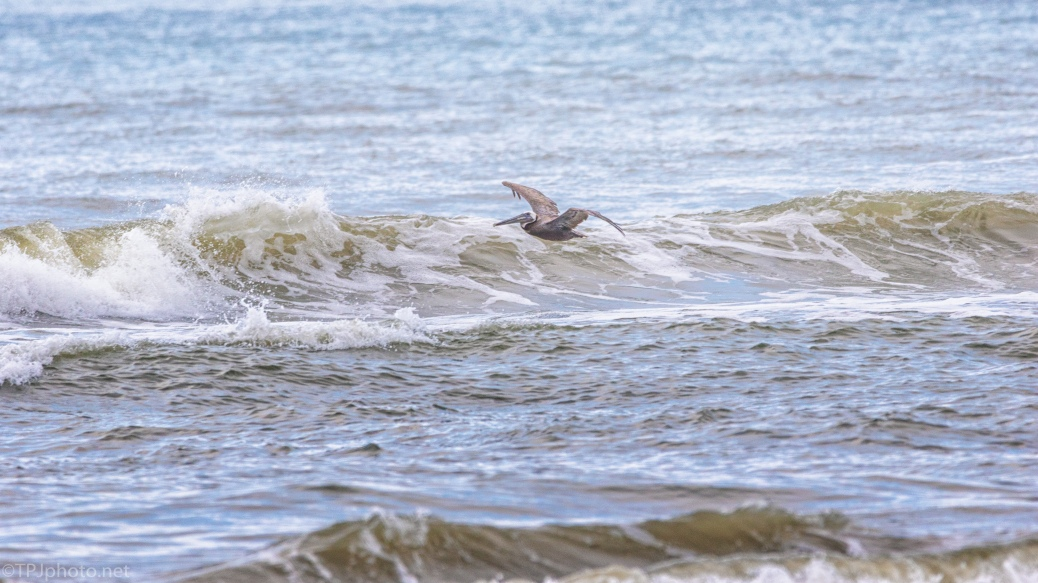 Pelican And The Surf - click to enlarge