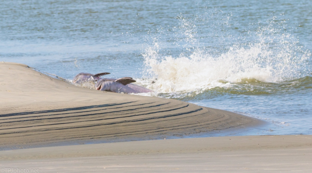 Pushing Fish On The Shore, Dolphins - click to enlarge
