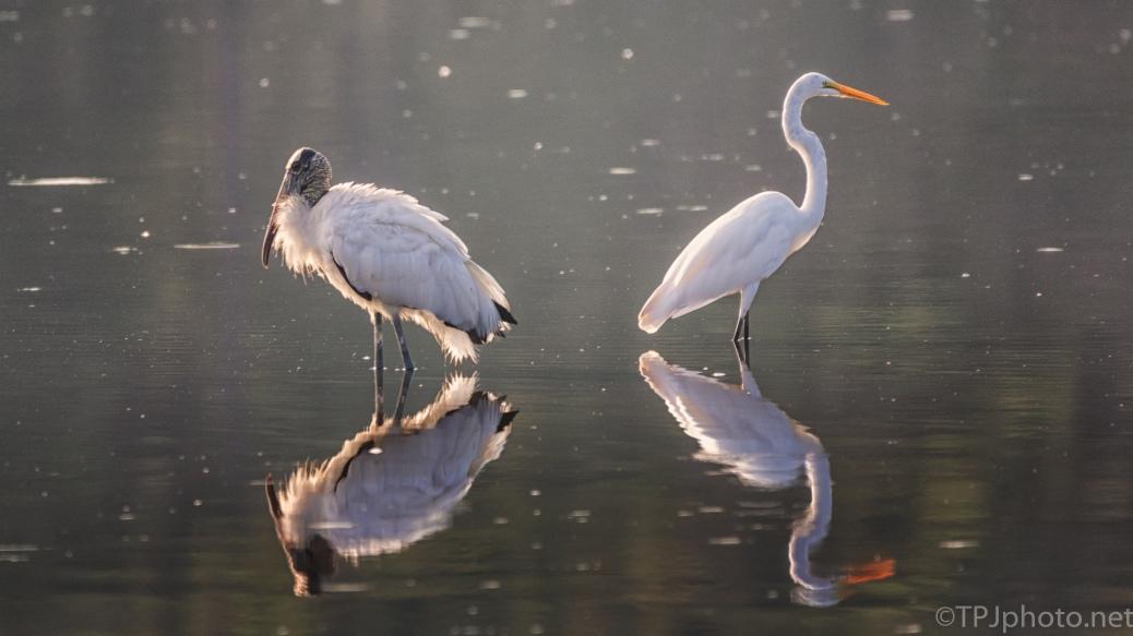 Morning Light, Stork And Egret - click to enlarge